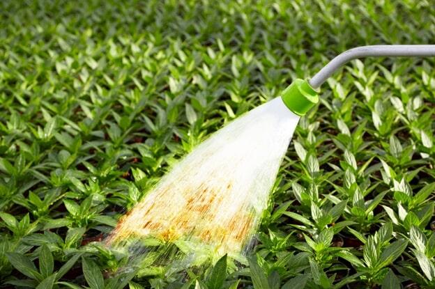 Полив растений водой из скважины